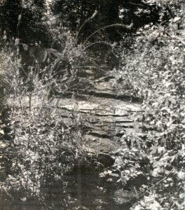 motts-mills-hutton-creek-c1985-2